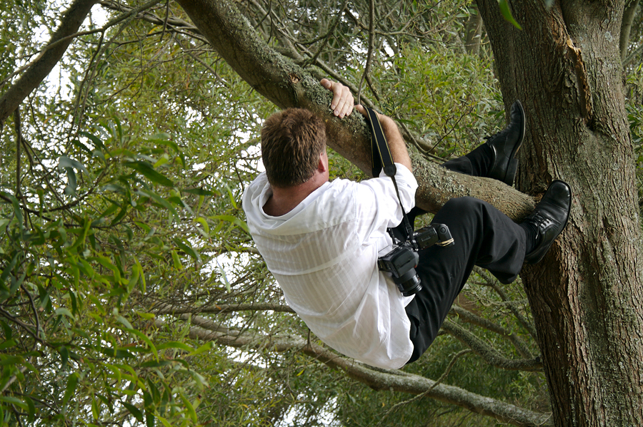 Is your wedding photographer willing to climb a tree for you?