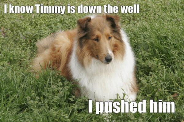 lassie-pushed-timmy.jpg